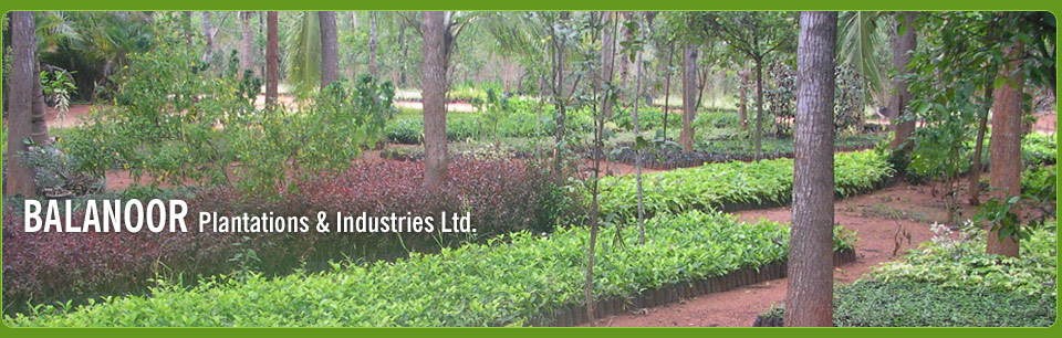 ... , Coffee and Spices Plantations, Roses and Ornamental Plants in India